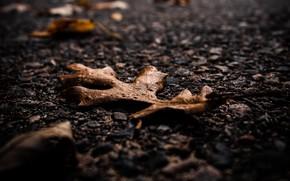 Картинка осень, асфальт, макро, лист, сухие листья
