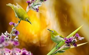 Картинка цветы, птицы, природа, пара, Тайвань, белоглазка, FuYi Chen, белый глаз