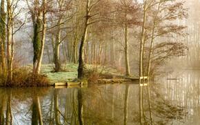Картинка осень, деревья, природа, туман, озеро, парк, отражение