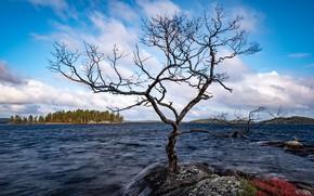 Картинка озеро, дерево, Финляндия, Инари