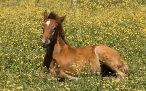 Картинка лошадь, луг, жеребёнок