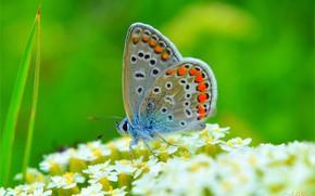 Обои Макро, Бабочка, Macro, Butterfly