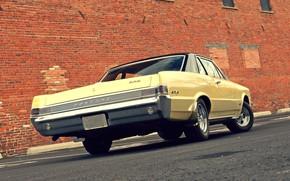 Картинка Muscle, Ass, Classic, Pontiac, GTO