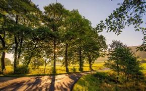 Картинка дорога, пейзаж, природа, парк, красота