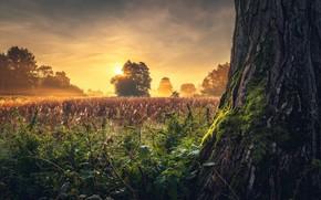 Картинка трава, солнце, деревья, пейзаж, природа, туман, ствол