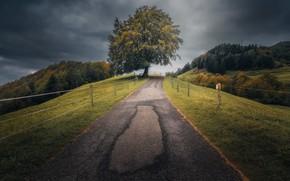Картинка дорога, небо, дерево