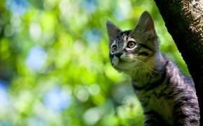 Картинка взгляд, фон, котёнок, котейка