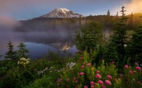 Картинка лес, цветы, горы, туман, озеро, Doug Shearer