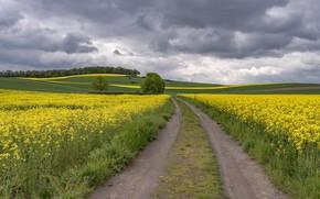 Картинка дорога, поле, Германия
