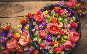 Картинка цветы, клубника, клевер, фиалки