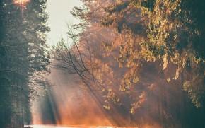 Картинка дорога, лес, туман, утро