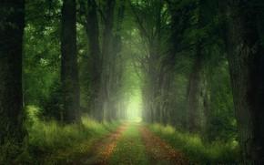 Обои дорога, лес, листья, деревья, Природа, Zan Foar