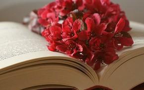 Картинка цветы, листы, книга