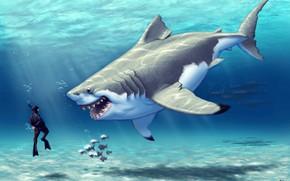 Картинка Океан, Море, Рыба, Акула, Рыбки, Хищник, Арт, Еда, Под водой, Радость, Водолаз, Who hunts whom?, …