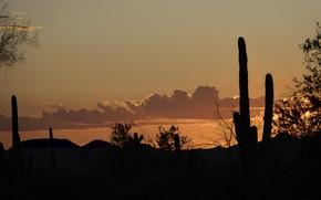 Картинка пустыня, кактус, силуэт, Аризона, США, Сонора, Тусон