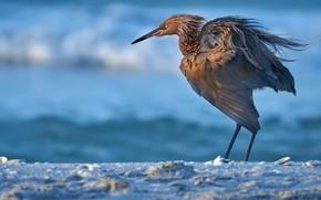 Картинка природа, ветер, птица