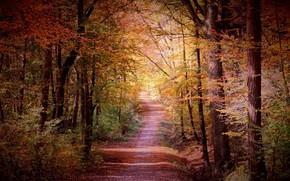 Картинка осень, лес, пейзаж, природа, тропа, тропинка