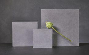 Картинка мак, куб, Poppy