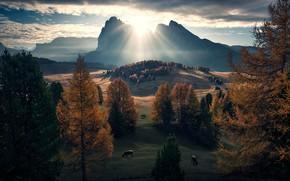 Картинка солнце, скалы, коровы, луга