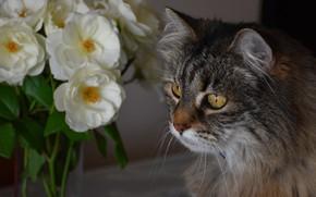 Картинка кошка, кот, взгляд, морда, цветы, портрет, букет