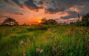 Обои лето, небо, трава, деревья, закат