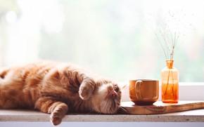 Картинка кошка, кот, взгляд, морда, поза, бутылка, окно, рыжий, кружка, лежит, букетик, развалился