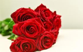 Картинка розы, красные, red, rose, бутоны, bouguet