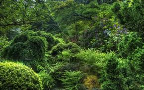 Картинка деревья, цветы, сад, кустарники