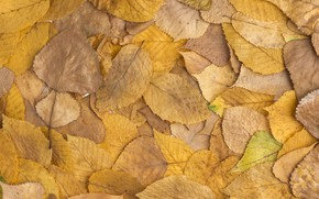 Картинка осень, листья, фон, colorful, background, autumn, leaves, осенние