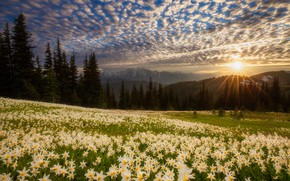 Картинка поле, лес, лучи, закат, цветы, холмы, лилии, Doug Shearer