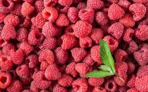 Картинка ягоды, малина, фон, red, fresh, background, berries, raspberry