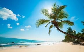 Картинка пляж, пальмы, океан, Карибы, Caribbean island