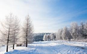 Картинка зима, снег, деревья, пейзаж, зимний, landscape, nature, beautiful, winter, snow