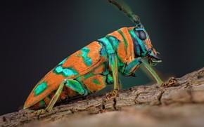 Картинка макро, оранжевый, фон, жук, профиль, насекомое, кора, пятнистый