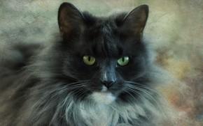 Картинка портрет, взгляд, кошка, серый, морда, пушистый, кот