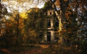 Картинка осень, лес, дом