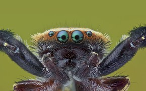 Картинка глаза, лапки, паук