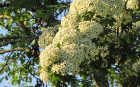 Картинка Цветочки, Белые, Мелкие, Meduzanol ©, Весна 2018