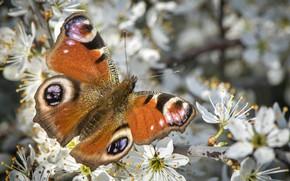 Картинка цветы, весна, бабочкa