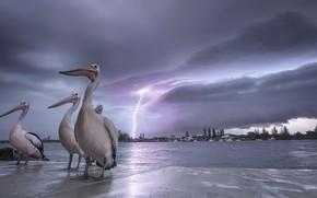 Картинка птицы, ночь, берег