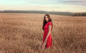 Картинка поле, девушка, природа, шляпа, платье, брюнетка, колосья, Виктория Дубровская