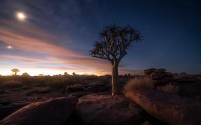 Картинка ночь, камни, дерево