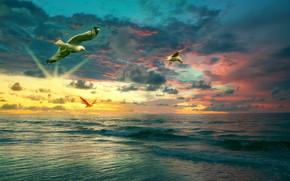 Картинка море, закат, тучи, чайки