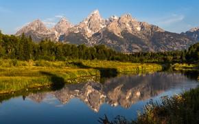Картинка зелень, лес, небо, трава, вода, солнце, деревья, горы, отражение, река, скалы, США, Гранд-Каньон