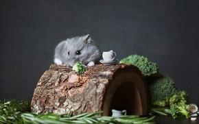 Картинка зелень, взгляд, дерево, еда, хомяк, нора, мышь, чаепитие, кружка, чашка, лежит, домик, бревно, серая, кора, …