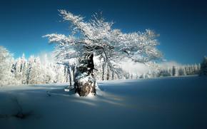 Картинка зима, небо, снег, природа, тишина, мороз, солнечный день, дерево в снегу, деревья в инее, на …
