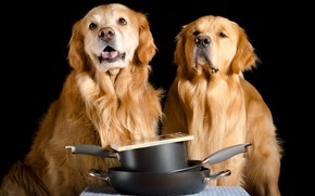 Картинка собаки, дом, друзья