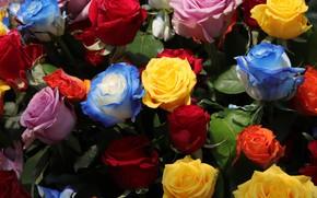 Картинка листья, цветы, розы, разноцветье