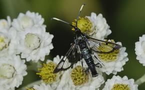 Картинка макро, цветы, насекомое
