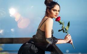 Картинка девушка, роза, Rosa Ortega
